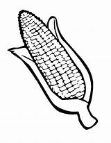 Corn Coloring Drawing Ear Cob Pages Indian Template Stalk Field Stalks Thanksgiving Sketch Getdrawings Autumn Printable Print Templates Getcolorings Button sketch template