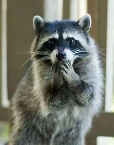 23 Hilarious Photos Of Surprised Animals