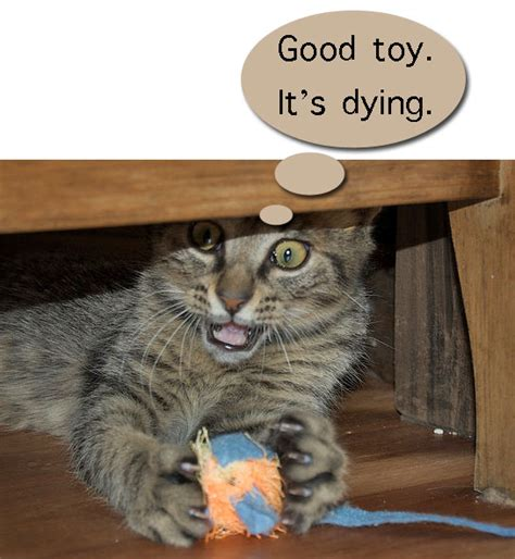 toys cats why bored playing stop quickly