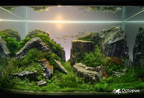 Aquascape Designs For Aquariums by Aquascaping The Daily Omnivore