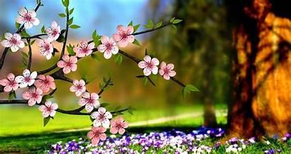 Nature Flowers 3d Wallpapers Flower Wallpapertip