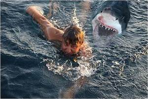 Sharks Eating People Latest Pictures/Images 2013 | Top hd ...