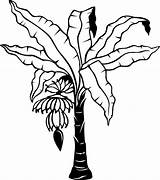 Banana Tree Coloring Clipart Outline Leaf sketch template
