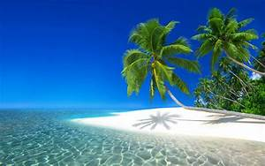Tropical 4k Ultra Hd Wallpaper Background Image