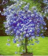 Ideas About Flowering Trees 2017 On Pinterest Trees To Plant Spring Ideas Bulb Combinations Plant Combinations Flowerbeds Ideas Spring Yellow Flower Brush Pack Free Photoshop Brushes At Brusheezy Posts Buy Plants In Spring Without Blooms Plant In Middle Of Flower