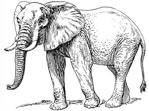 elephant   baby elephant