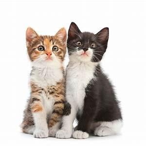 Katzen Fernhalten Von Möbeln : behandlung von katzen in der kleintierpraxis pferdeklinik und kleintierpraxis ~ Sanjose-hotels-ca.com Haus und Dekorationen