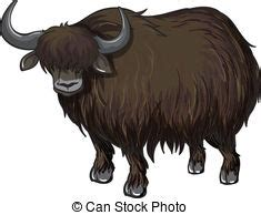 Yak Clipart Yak Clip And Stock Illustrations 585 Yak Eps