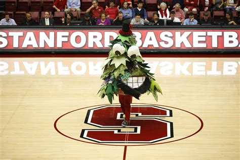 Michigan State Football Images Stanford 39 S Palm Tree Mascot Is Its Most Horrifying Yet Sbnation Com