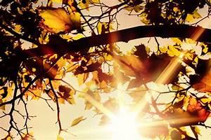 Schöne Herbstbilder Kostenlos : herbstbild kostenlos foto gratis ~ A.2002-acura-tl-radio.info Haus und Dekorationen