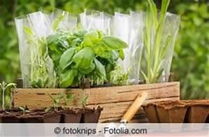 Erde Für Kräuter : beste pflanzzeit f r kr uter im garten und auf dem balkon ~ Lizthompson.info Haus und Dekorationen