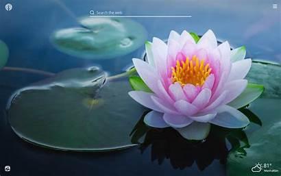 Lotus Flower Wallpapers Tab Theme Flowers Indian