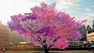 Arbre A Fruit : l arbre aux 40 fruits veut sauver la biodiversit youtube ~ Melissatoandfro.com Idées de Décoration