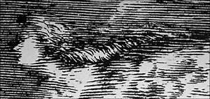 The Cassini and Maraldi families