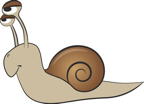 Snail, Shell, Mollusk, Slowly