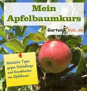 Wann Schneidet Man Hortensien Zurück : wann schneidet man einen apfelbaum der garten ratgeber ~ A.2002-acura-tl-radio.info Haus und Dekorationen