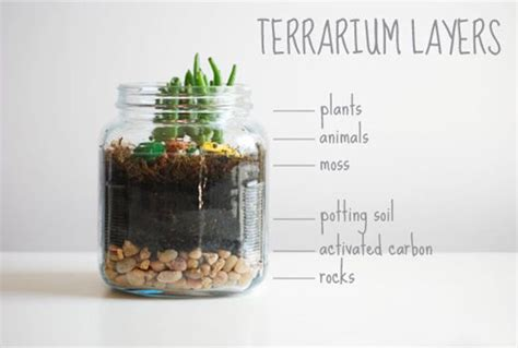 what you need for a terrarium get your hands dirty with these fun kid friendly terrariums from sweet little peanut all you