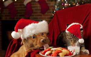 Christmas wallpaper with dog and cat | HD Animals Wallpapers