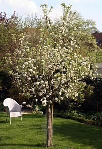 Bäume Für Den Garten : freudengarten ein baum f r den garten ~ Lizthompson.info Haus und Dekorationen