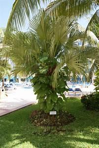unique jardin avec palmier idees de salon de jardin With amenagement petit jardin avec piscine 9 album olivier et palmier arbor mineral paysagiste