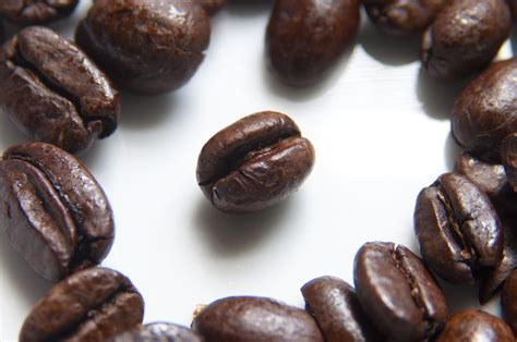 Coffee Beans Photographed In Macro.jpg Java Cow Coffee & Ice Cream Roasted Paint Color Nz Valhalla Uk Roast Bar Oldham Logs On Grill