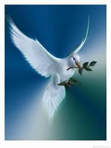 La paloma de la paz Pósters en AllPosters.es