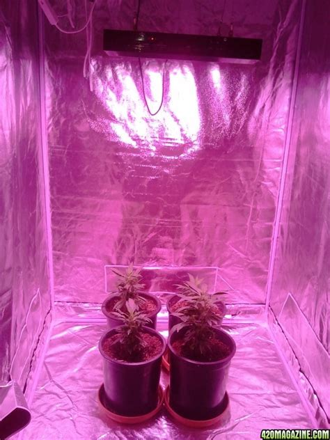 used led grow lights led grow lights used in plants growing 420 magazine