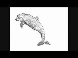 Comment Dessiner La Mer : dessin de dauphin comment dessiner youtube ~ Dallasstarsshop.com Idées de Décoration