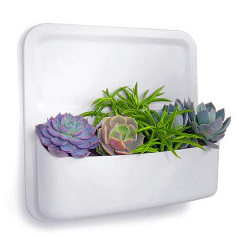 Urbio Wall Planter - urbio wall planter in magnetic office organizers