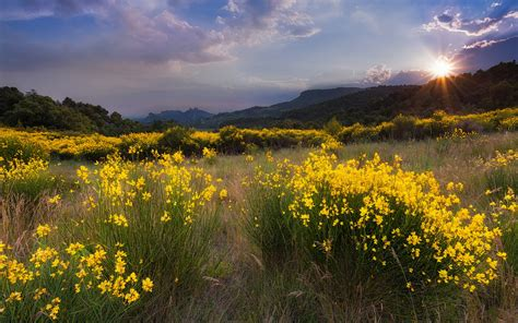 wallpaper nature landscape meadow yellow flowers grass