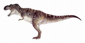 Tyrannosaurus rex | Jurassic park and Tyrannosaurus