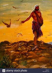 The, Sower, Scattering, Seed, Bible, Story, Painting, By, Henry, Coller, Stock, Photo