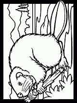 Animali Bosco Colorat Castores Animalute Desene Salbatice Cliccate Planse Carti sketch template