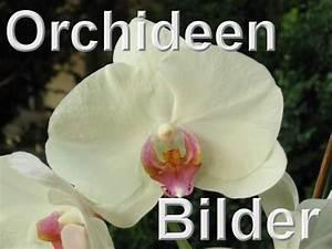 Schöne Orchideen Bilder : meine orchideen bilder und fotos ~ Orissabook.com Haus und Dekorationen