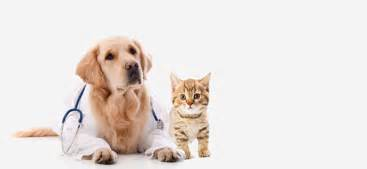 animal clinic local directories cyprus