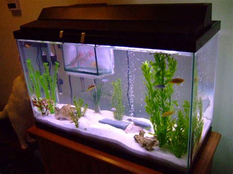 cichlids tank exles 29 gallon