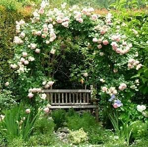 Weiße Dekosteine Garten : wei e rosen kletterpflanzen gem tliche sitzecke holz gartenbank garten pinterest ~ Sanjose-hotels-ca.com Haus und Dekorationen