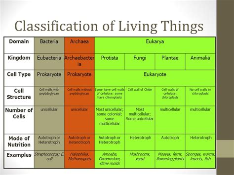 Macroevolution And Modern Classification