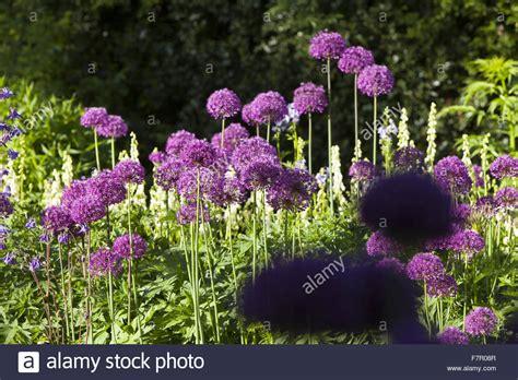 welche blumen blühen im juni kante welche blumen bl 252 hen im juni makarska crotia 16 2017 kleine rosa wikhouse blumen im