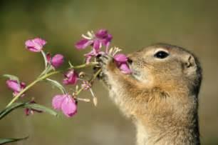 Alaska Flower State Animal
