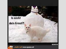 Schneekatze Lustige Bilder auf Spassnet