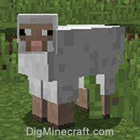 summon  sheep  minecraft