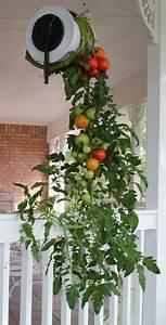 topsy turvy turn n grow tomato garden growing vegetables