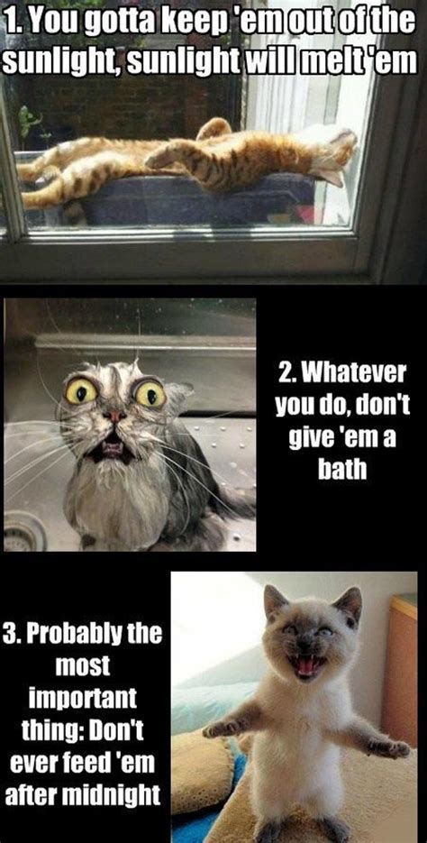Cat Interesting Meme - funny weird cats memes
