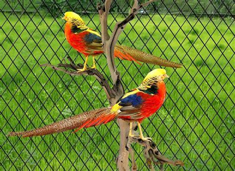 cr it agricole si e social ferma de familie creșterea fazanilor diferența dintre