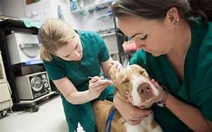 Top Veterinary Technician Schools U0026 Education Veterinary