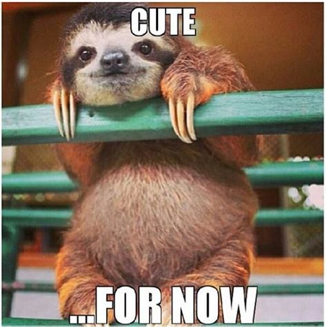 Too Cute Meme Face - 69 best images about sloth on pinterest creepy sloth funny and soon meme