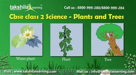 ncert cbse class  science plants  trees types