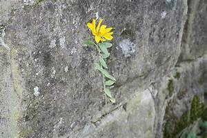 Liebe Ist Wie Eine Blume : trauerfeier gebl ht wie eine unauff llige blume ~ Whattoseeinmadrid.com Haus und Dekorationen