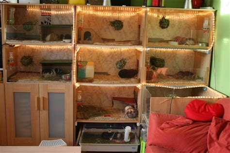 welcome to the guinea pig palace   IKEA Hackers   IKEA Hackers